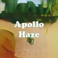 Apollo Haze strain