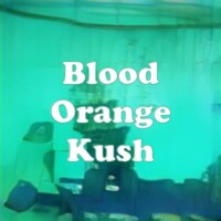 Blood Orange Kush strain