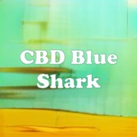 CBD Blue Shark strain