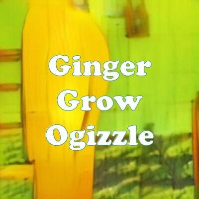Ginger Grow Ogizzle strain