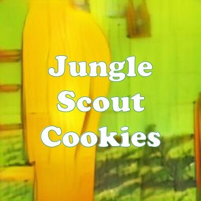Jungle Scout Cookies strain