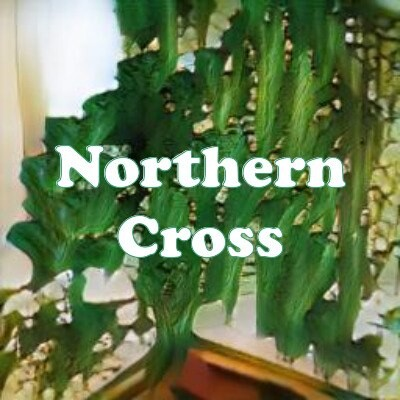 Northern Cross strain