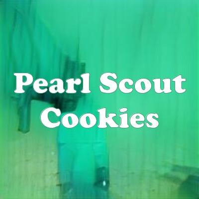 Pearl Scout Cookies strain