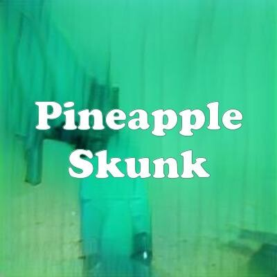 Pineapple Skunk strain