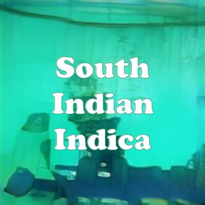 South Indian Indica strain