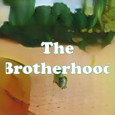 The Brotherhood strain